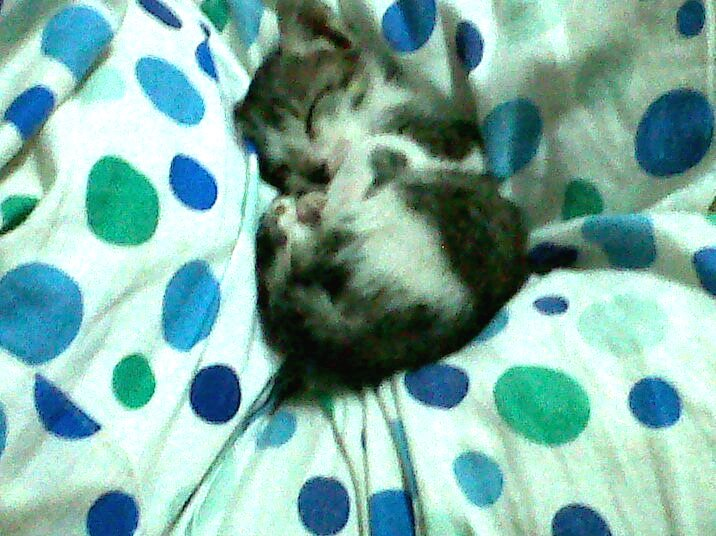 Little Yuky Is Sleeping 2